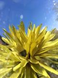 sztucznego tła kwiatu odosobniony biel Obrazy Royalty Free