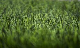 Sztucznego zielonej trawy tekstury tła boczny widok fotografia stock