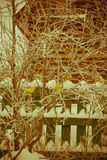 Sztucznej dekoraci Złoty Ptasi Retro Obrazy Royalty Free