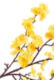 Sztuczni kolorów żółtych kwiaty Obrazy Royalty Free