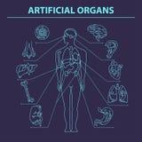Sztuczni organy - Cienieje linię 9 Obraz Stock
