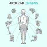 Sztuczni organy - Cienieje linię 10 Obrazy Stock