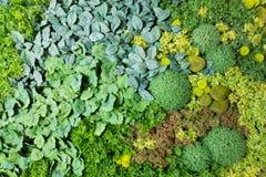 Sztuczni Pionowo ogródy z Sfałszowanymi roślinami na ścianach Zdjęcie Stock