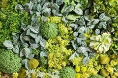 Sztuczni Pionowo ogródy z Sfałszowanymi roślinami na ścianach Zdjęcia Stock
