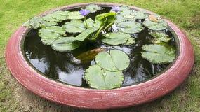 Sztucznie tworzący staw dla błękitnego Lotus, wodne leluje w Wietnam jako dekoracja w parku, tło obrazy stock