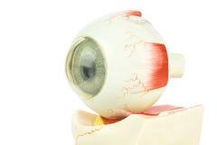Sztuczny ludzki oko obrazy stock