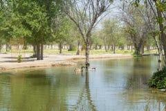 Sztuczny piękny jezioro przy oazą w pustyni otaczającej drzewami i krzakami Zdjęcie Royalty Free