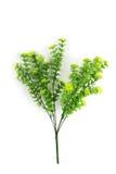 sztuczny piękny kwiat Obrazy Royalty Free