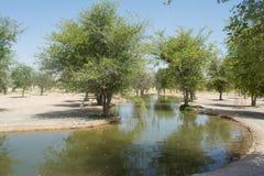 Sztuczny piękny lough przy oazą w pustyni otaczającej drzewami i krzakami Fotografia Stock