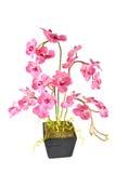 sztuczny przygotowania kwiat Obraz Stock