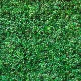 Sztuczny rośliny tło Obraz Stock