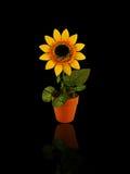 sztuczny słonecznik Obrazy Stock