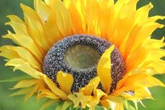 Sztuczny słonecznik Obraz Stock