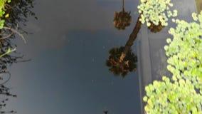 Sztuczny staw z nadwodnymi roślinami zbiory wideo
