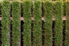 Sztuczny trawy ogrodzenie fotografia royalty free