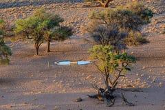 Sztuczny waterhole dla zwierząt w Namibia Obrazy Stock