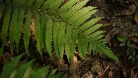 Sztuka światło i cień na paprociowych liściach zdjęcie wideo