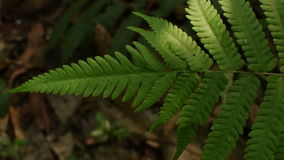 Sztuka światło i cień na paprociowych liściach zbiory wideo