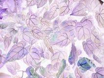 Sztuka Anthurium crystallinum negatywu liście fotografia stock
