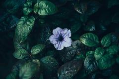 Sztuka kwiaty, flowear bez fotografia stock