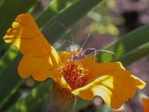 Sztuka kwiaty obrazy stock