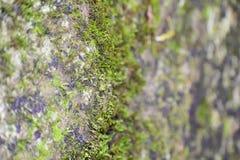 Sztuka las ziemia Zdjęcia Royalty Free