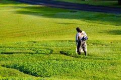 Sztuka na trawie Obraz Royalty Free