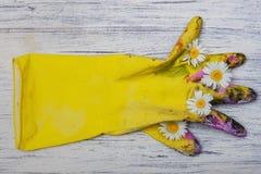 Sztuka przedmiota gumowa rękawiczka i stokrotki Obraz Stock