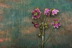 Sztuka przedmiota suchy kwiat Obraz Stock