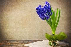 Sztuka rocznika tła kwiatu hiacyntowej deski drewniana wiosna Obrazy Stock