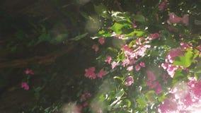 Sztuka słońce przez świeżych zieleń liści i menchia kwiatów z pięknymi obiektywu racy skutkami swobodny ruch 1920x1080 zdjęcie wideo