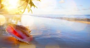 Sztuka Shell na tropikalnej plaży Obraz Stock