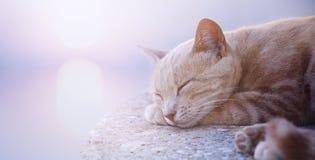 Sztuka sypialny kot przy wschodem słońca dzień fotografia stock