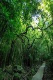 Sztuka w ruchu w tropikalnym lesie deszczowym Zdjęcia Royalty Free