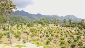 Sztuka wiejski krajobraz Pole, góra zbiory