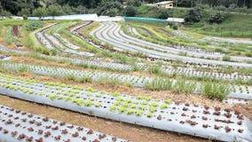 Sztuka wiejski krajobraz Ranek przy pięknym truskawki gospodarstwem rolnym zbiory