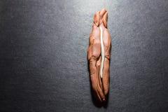 Sztuki doh Piernikowego mężczyzna ewolucja 1 Zdjęcie Stock