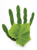 sztuki ekologiczny ręki natury symbol zdjęcia royalty free