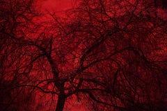 Sztuki fotografii mistyczny drzewo na czerwonym tle podwójny narażenia Zdjęcia Stock