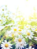 Sztuki Jaskrawy lato kwitnie Naturalnego tło Obraz Royalty Free