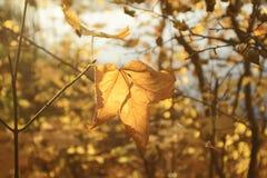 sztuki jesień tła cyfrowy spadek liść Zdjęcia Royalty Free