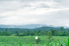 Sztuki kukurydzany pole Zdjęcia Stock