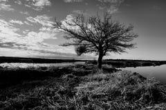 Sztuki piękna B&W wizerunek jałowy drzewo Obrazy Royalty Free