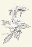 sztuki piękna kwiatu linia prostota ilustracja wektor