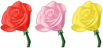 sztuki różowych czerwonych róż wektorowy kolor żółty royalty ilustracja