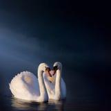 Sztuki Romantyczna łabędzia para Zdjęcia Royalty Free