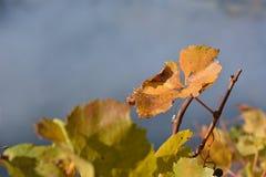 sztuki tła ramy gronowa liść papieru tekstury akwarela Fotografia Stock
