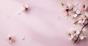 Sztuki wiosna kwitnie tło Zdjęcia Royalty Free