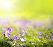 Sztuki wiosny zieleni abstrakcjonistyczny tło Obrazy Stock