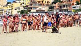 Szturmowy demonstraci szkolenia pies zbiory